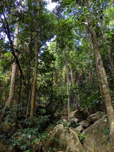 Fitzroy Island Randonnee Jungle Tropicale