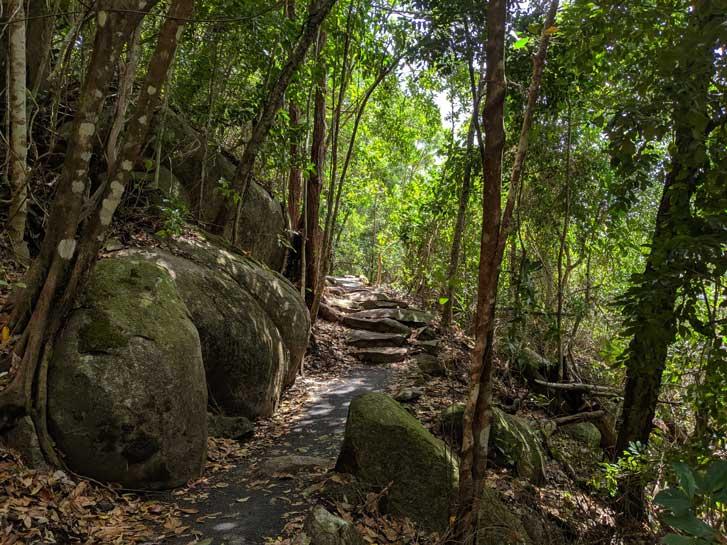 Fitzroy Island Randonnee Jungle
