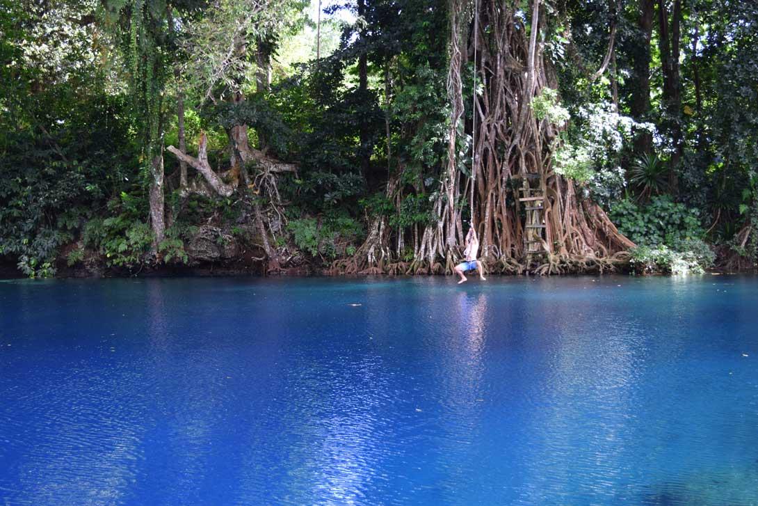Saut de Tarzan depuis le banyan tree au Matevulu blue hole sur Espiritu Santo