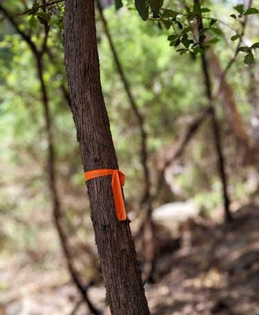 Ruban sur un arbre pour marquer le chemin de la randonnée