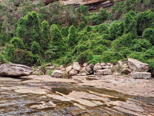Un mur végétal au sein du Tahmoor canyon