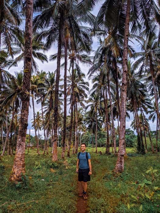 Randonnée au milieu d'une forêt de cocotiers et palmiers sur Espiritu Santo