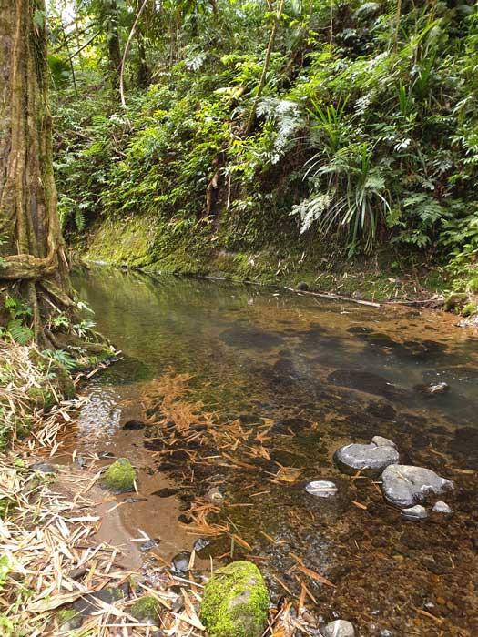 Début de la rivière Sarakata