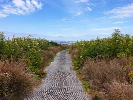 Chemin qui traverse les fourrés de the Nut