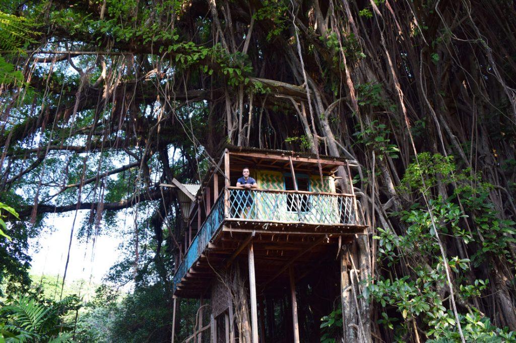 Tree house dans le banyan tree géant au milieu de la jungle sur l'île de Tanna