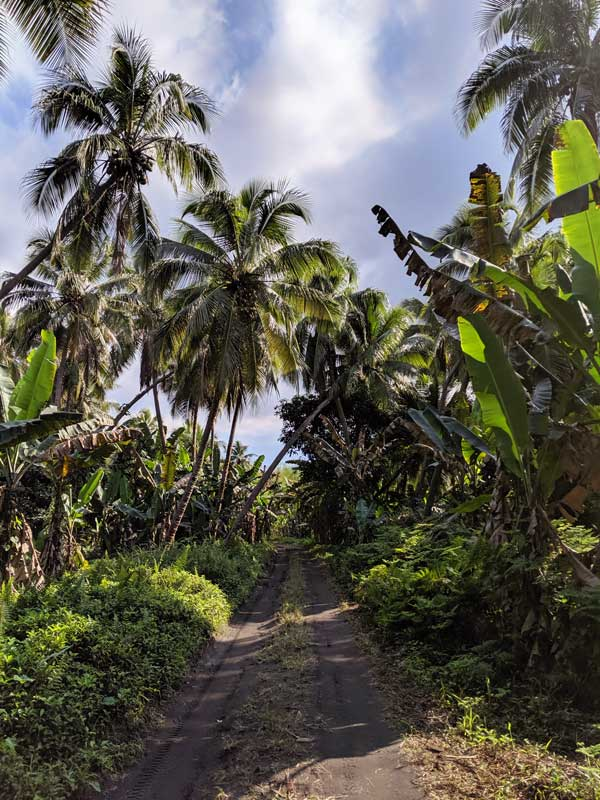 Route au milieu de la jungle à Tanna