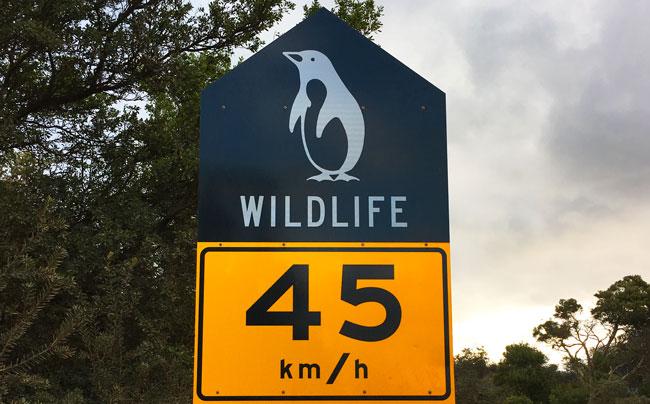 Panneau de signalisation avec dessin de pingouin de Bruny Island