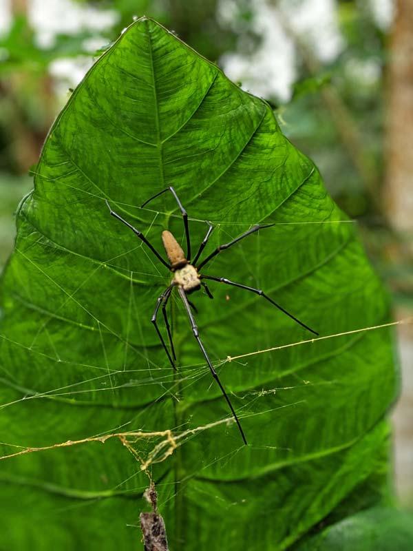Araignée dans la Freshwater Plantation