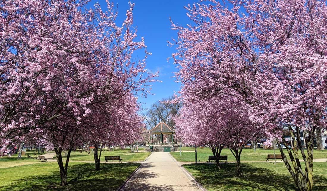 Arbres en fleurs dans Robertson Park dans la petite ville d'Orange