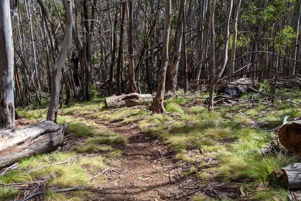 Balade en forêt au sommet du Mont Canoblas