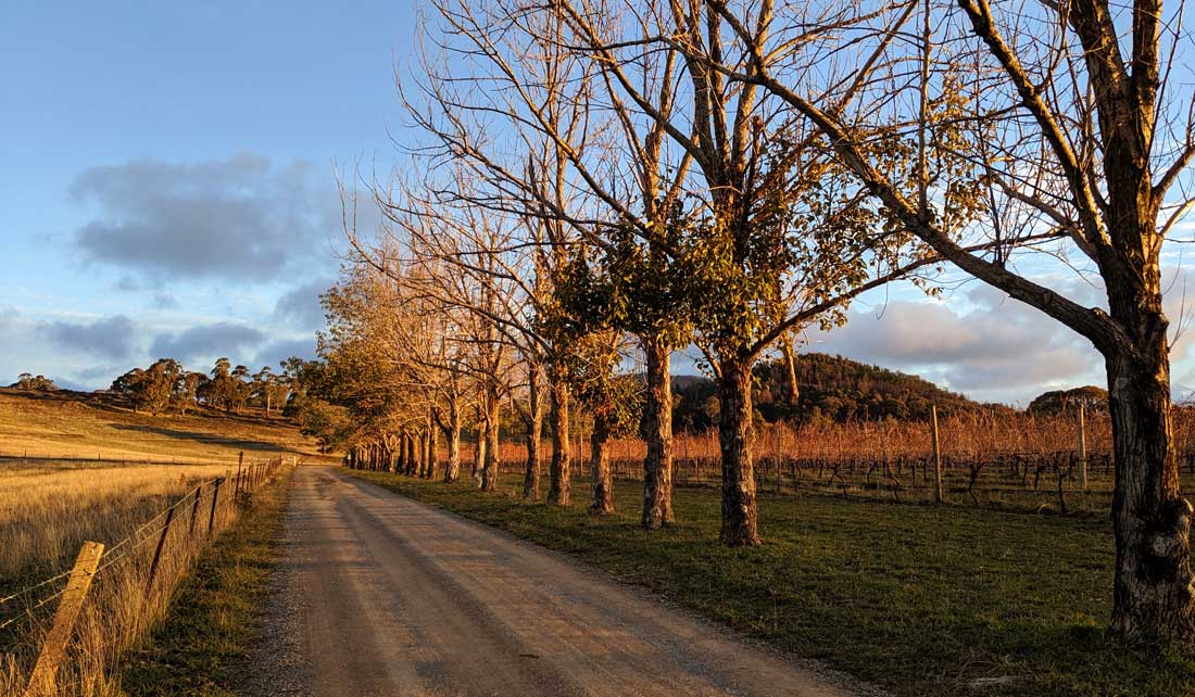 Chemin bordant les vignes du domaine viticole De Salis