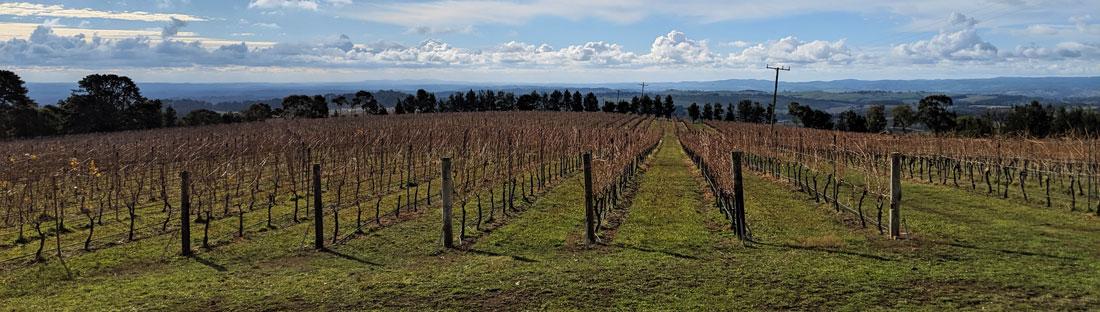 Vignes du domaines viticole De Salis