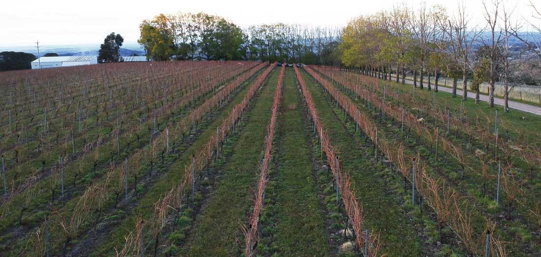 Vignes de la winery De Salis
