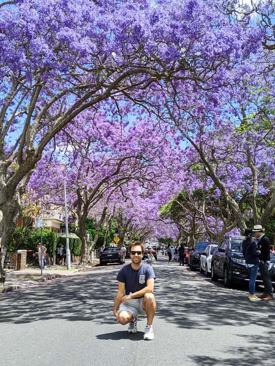 Mika posant devant les jacarandas en fleurs dans la Jacaranda Street au nord de Sydney