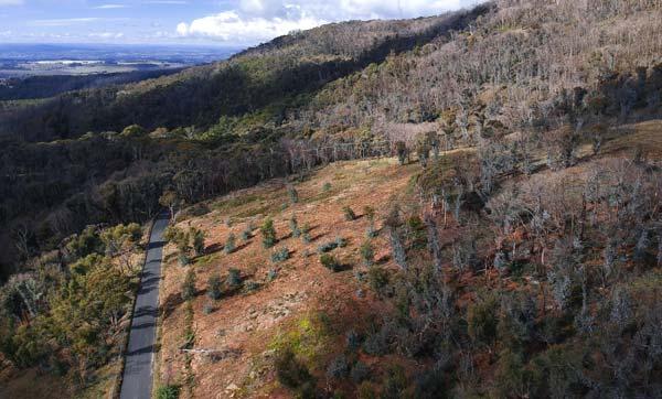 Route menant au Mt Canoblas