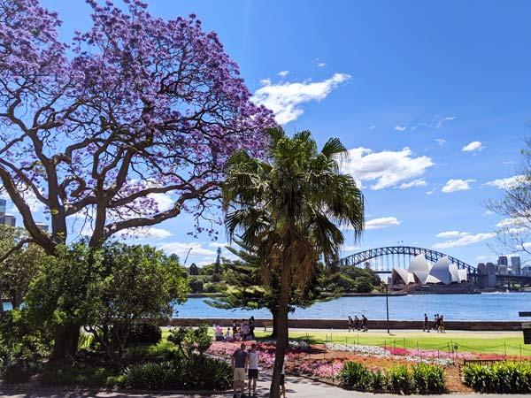 Un jacaranda tree dans le Royal Botanic Garden avec vue sur l'Opera House et le Harbour Bridge