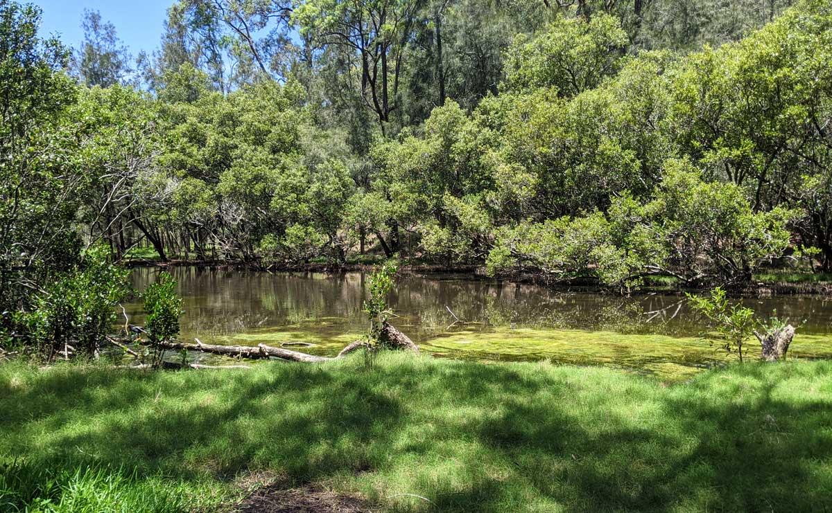 Calna creek et tous ses moutisques
