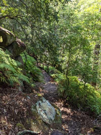 Chemin qui serpente dans la forêt vers Sams Creek