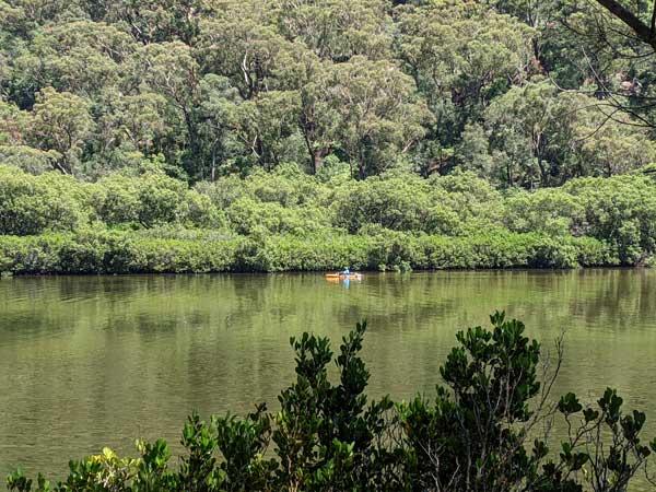 Kayak pagayant sur la rivière Berowra Creek