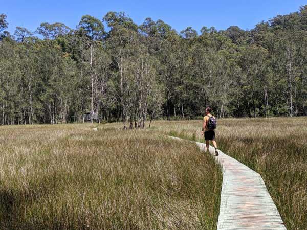 Les marais de Place of Wind le long de la randonnée dans le Berowra Valley National Park