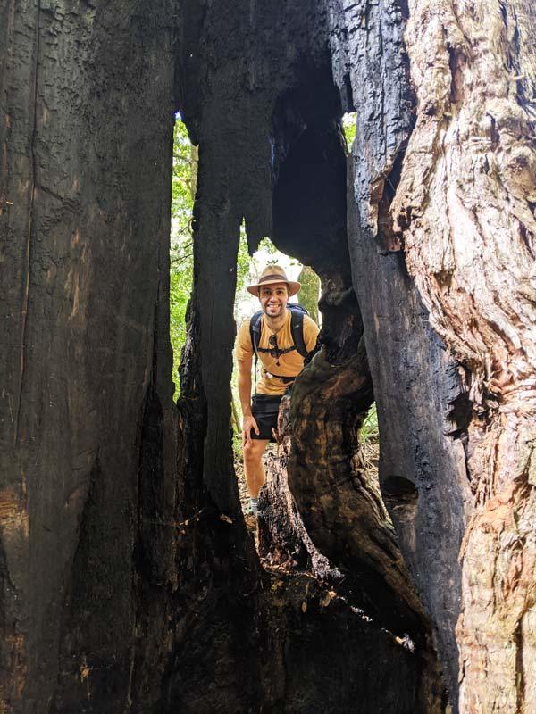 Mika prenant la pose derrière un arbre creux sur le Couranga track