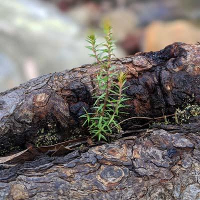 Petite pousse verte dans le creux d'un tronc d'arbre