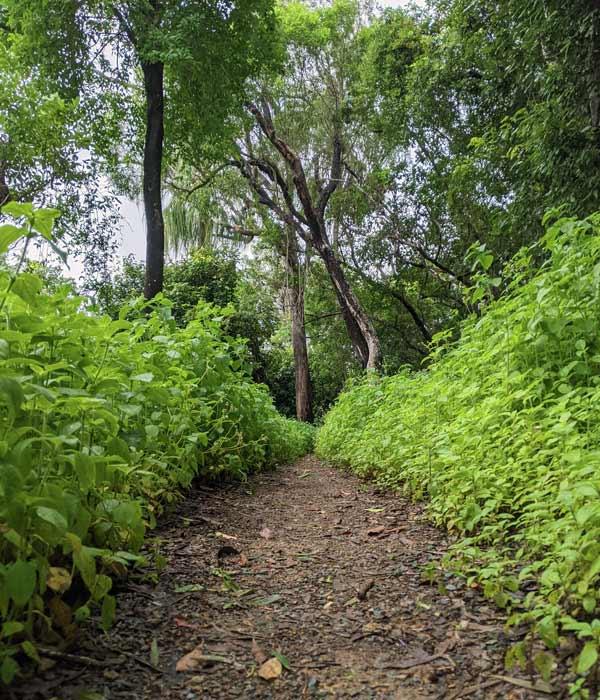 Chemin traversant la forêt sur Hamilton Island