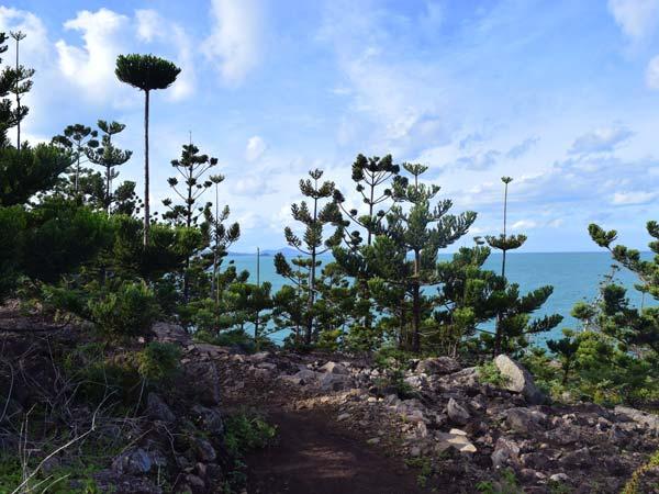 Chemin en bord de mer près d'Escape Beach et Coral Cove