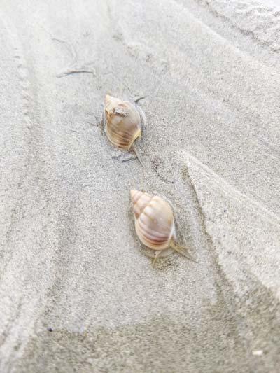 Bernard L'Hermite avançant dans le sable